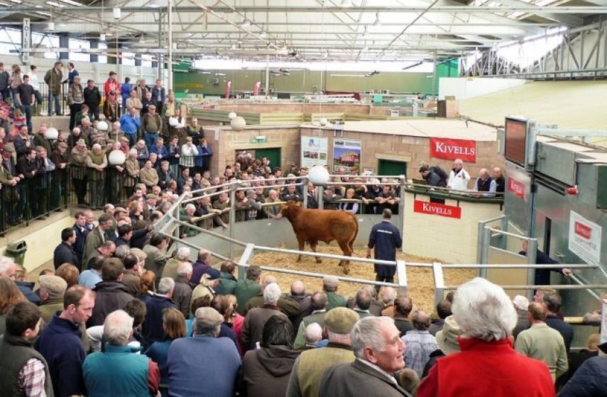 Exeter Livestock Centre, Devon