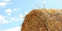 Top of a straw bale with blue sky