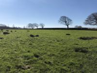 Approx._14.60_acres_grass_keep_available_Holsworthy_area