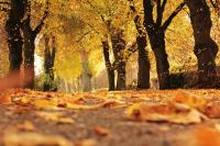 Selling Your Home this Autumn