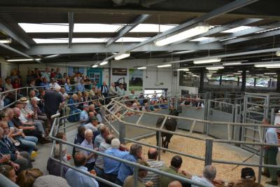 A packed crowd of buyers gather around the cattle ring