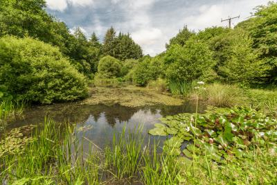 Minehouse Farm, Herodsfoot Pond - The pond within the grounds at Minehouse Farm with central island, surrounded by grass, bushes and trees