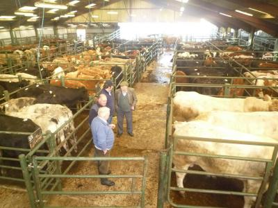 Hallworthy Stockyard, Cornwall